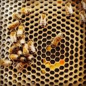 ¡Seguimos hablando de apicultura! 🐝 . Una vez cosechada la miel 🍯 es el momento de revisar las colmenas y aplicar tratamientos antivarroa. . ¿Tienes alguna duda? Nuestros técnicos pueden ayudarte. . . . #apicultura #tratamientosdeapicultura #colmenas #antivarroa #miel #apicultores