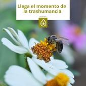 En #Prodel encontrarás todo lo que necesitas para elaborar la miel. 👉 LINK EN BIO - PRODUCTO SEMANAL  Ahora es el momento de la trashumancia, en busca de las últimas floraciones del año 🌸🌰(castaño, hinojo, malpica...) . Si te gustaría ser #apicultor y no sabes por dónde empezar, ¡contáctanos! 📞 . . . #miel #apicultura #apicultores #materialapicultor #elaborarlamiel #mieldeCanarias