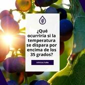 Con el calor del verano, regar la viña💧 es una de las tareas esenciales para cualquier viticultor🍇. ¿Sabes qué ocurriría si la temperatura se dispara por encima de los 35 grados? . Desde el blog de Prodel, compartimos algunos detalles sobre el efecto del calor en la viña y algunos consejos para evitar los daños de la planta. 👉LINK EN BIO . ¿Te quedan dudas? ¡Consúltanos! . . . #verano #golpedecalor #viticultura #vino #viña #vid #consejosProdel #ProdelAgricola