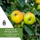 Nuestros clientes y amigos ya están listos para la recolección de la manzana reineta🍏. En Prodel recomendamos un equipamiento adecuado para elaborar la mejor sidra: nuestra trituradora y la prensa chicharra👉 https://prodelagricola.com/9-sidra . 📞¡No te quedes con las dudas! Pregunta a nuestros expertos y te asesorarán. . . . #manzana #recolecciondemanzana #manzanareineta #recolectar #equipamientomanzana #sidra #elaboraciondesidra #asesoramiento #ProdelAgricola