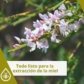La de Retama Canaria es única 🍯 y durante estas fechas los apicultores están recolectando su exquisita miel😋. . ¿Necesitas algún material para la extracción? En Prodel encontrarás de todo 👉 LINK EN BIO . . . #retama #retamacanaria #apicultores #apicultura #miel #recolectarmiel #elaborarlamiel  #extraerlamiel