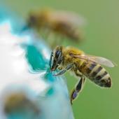 Durante el verano con tanto calor tenemos que cuidar a las abejas más que nunca🐝. Por eso, los apicultores están muy pendientes de que no les falte el agua en el apiario💧. . . . #abejas #apicultor #apicultura #verano #calor #altastemperaturas #cuidadodeabejas