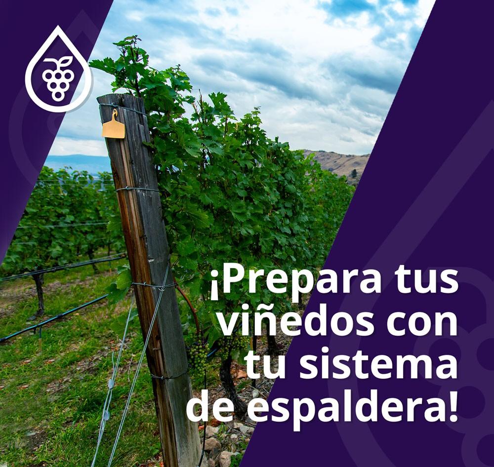 Asesoramiento viñedos